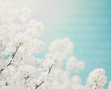 Clouds of Blossoms - Blue Nursery Wall Art
