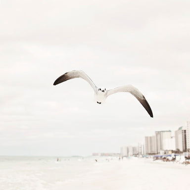 Cruisin' - Seagull Photography for your Rustic Coastal Decor