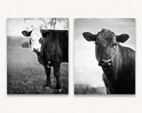 Cow Print Set of Two - Dixie & Daisy