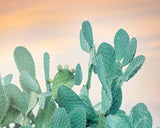 Desert Sunset II - Cactus Wall Art