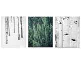 Evergreen Winter Set of Three Rustic Prints