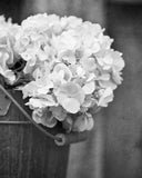 Black and White Farmhouse Hydrangea Prints - Set of Two