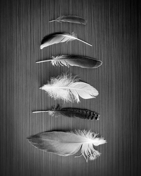 Feathered Nest in Black and White - Southwestern Wall Art