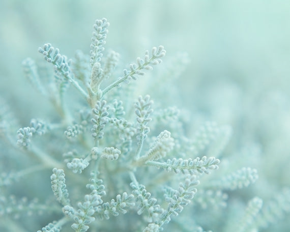 Fresh Mint - Mint Green Nature Photo