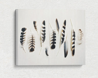 Light as a Feather - Modern Rustic Feather Photo