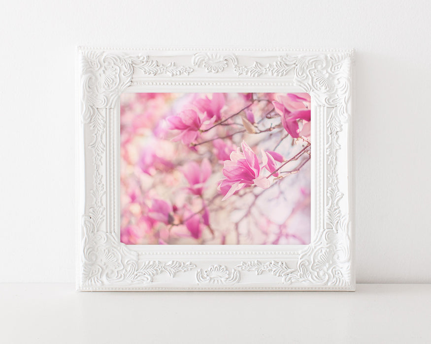 Magnolia Dreams - Shabby Chic Wall Art