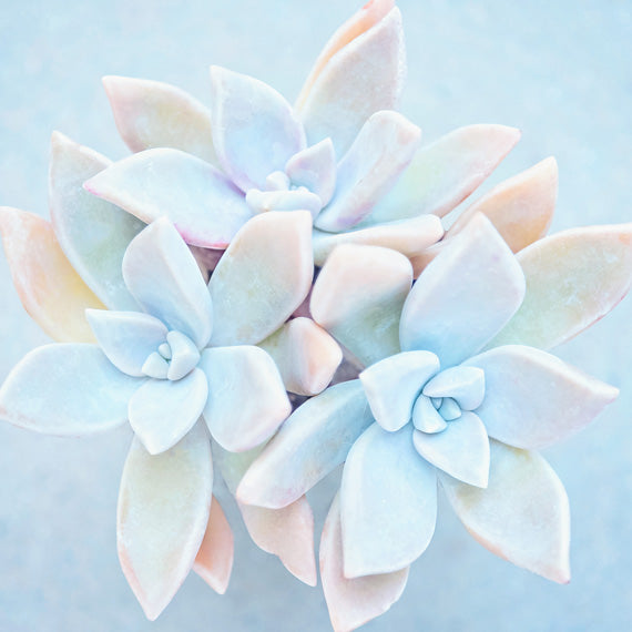 Matte Blue Succulents - Modern Blue Wall Art