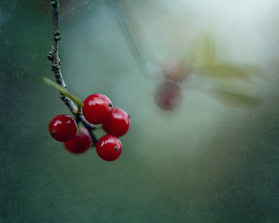 Reflection - Red Berries Nature Print
