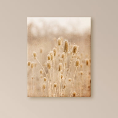 River Thistles - Warm Neutral Nature Photo for your Rustic Decor