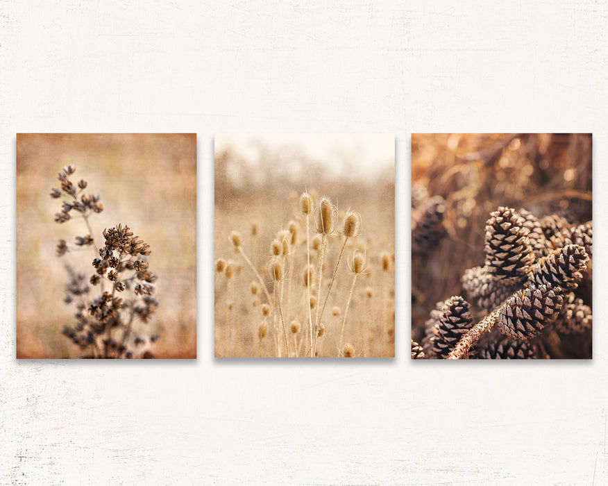 Rustic Thistles Set of Three