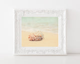 Sea Shells on the Sea Shore - Beach Wall Art