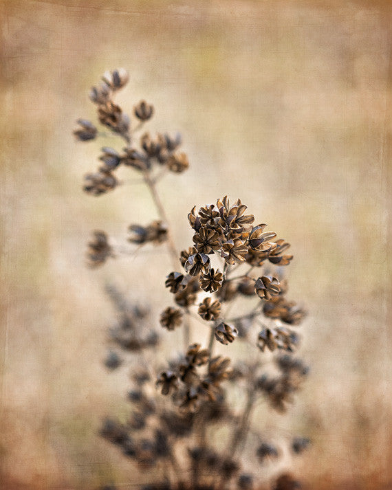 Seeds of Change - Brown Wall Art for your Rustic Decor