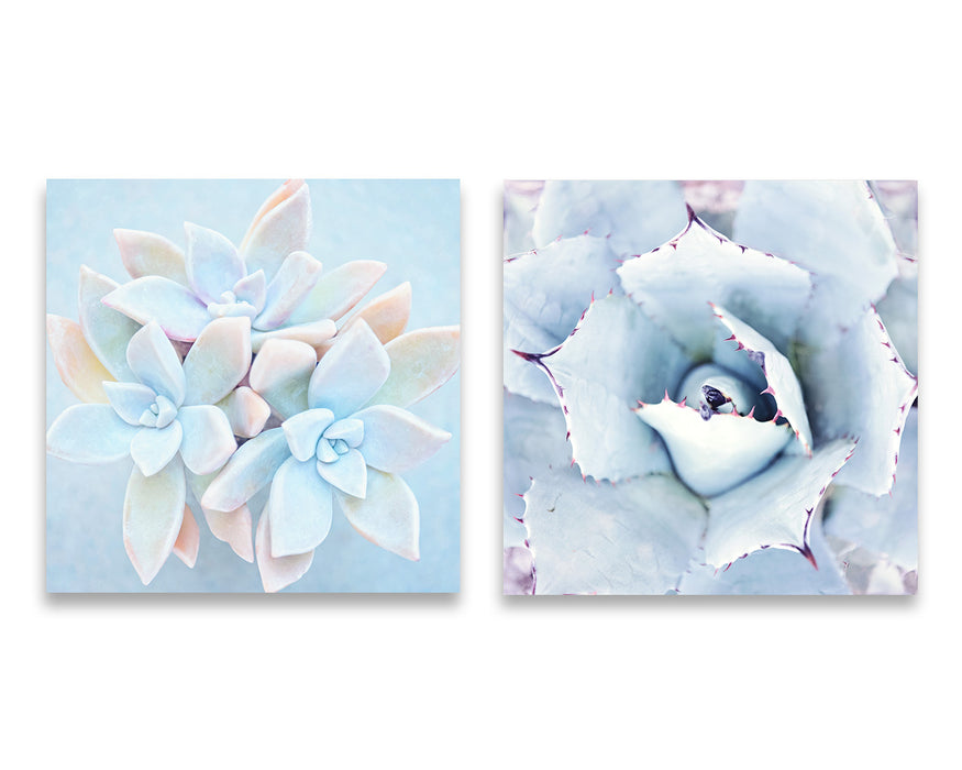 Set of Two Blue Succulent Photos