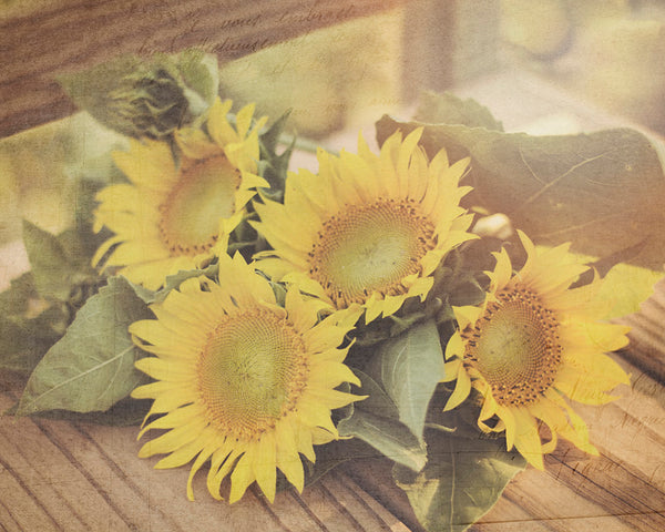 Sunflowers Country Chic Wall Art For Your Rustic Home