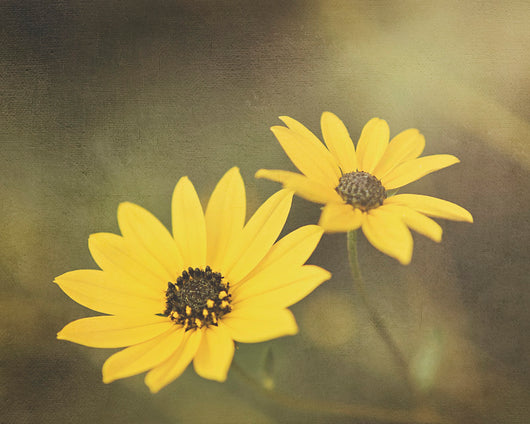 Susans - Country Kitchen Wall Decor
