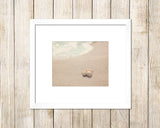 Three Shells in Neutral Tones - Beach Wall Art