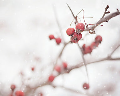 Winter Berries - Holiday Wall Art