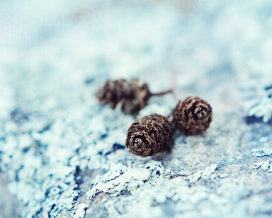 Winter Chill - Nature Photo for your Rustic Decor
