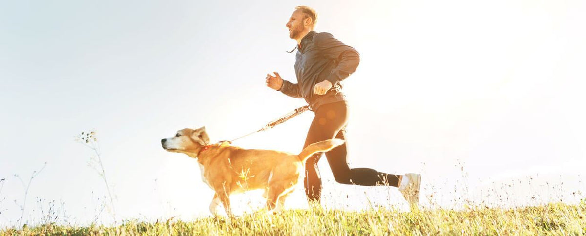 6 Simple Tweaks To Keep Your Pet Healthy and Happy