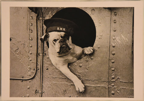 Bulldog - Postcard