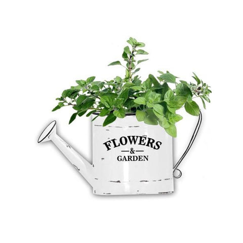 Metal Parody enamel  watering can shape flower pot