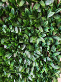 Artificial Rhododendron Leaf Accordion Expandable Wall Willow Composite Fencing