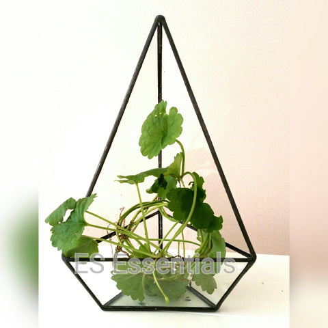 Glass Terrarium/mini Greenhouse/ Tabletop Succulent Planter