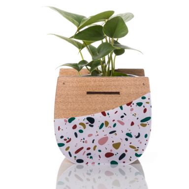 Large Indoor Planter: Tezza