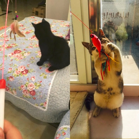 Cute Steel Wire Feather Tease Toy for Cats