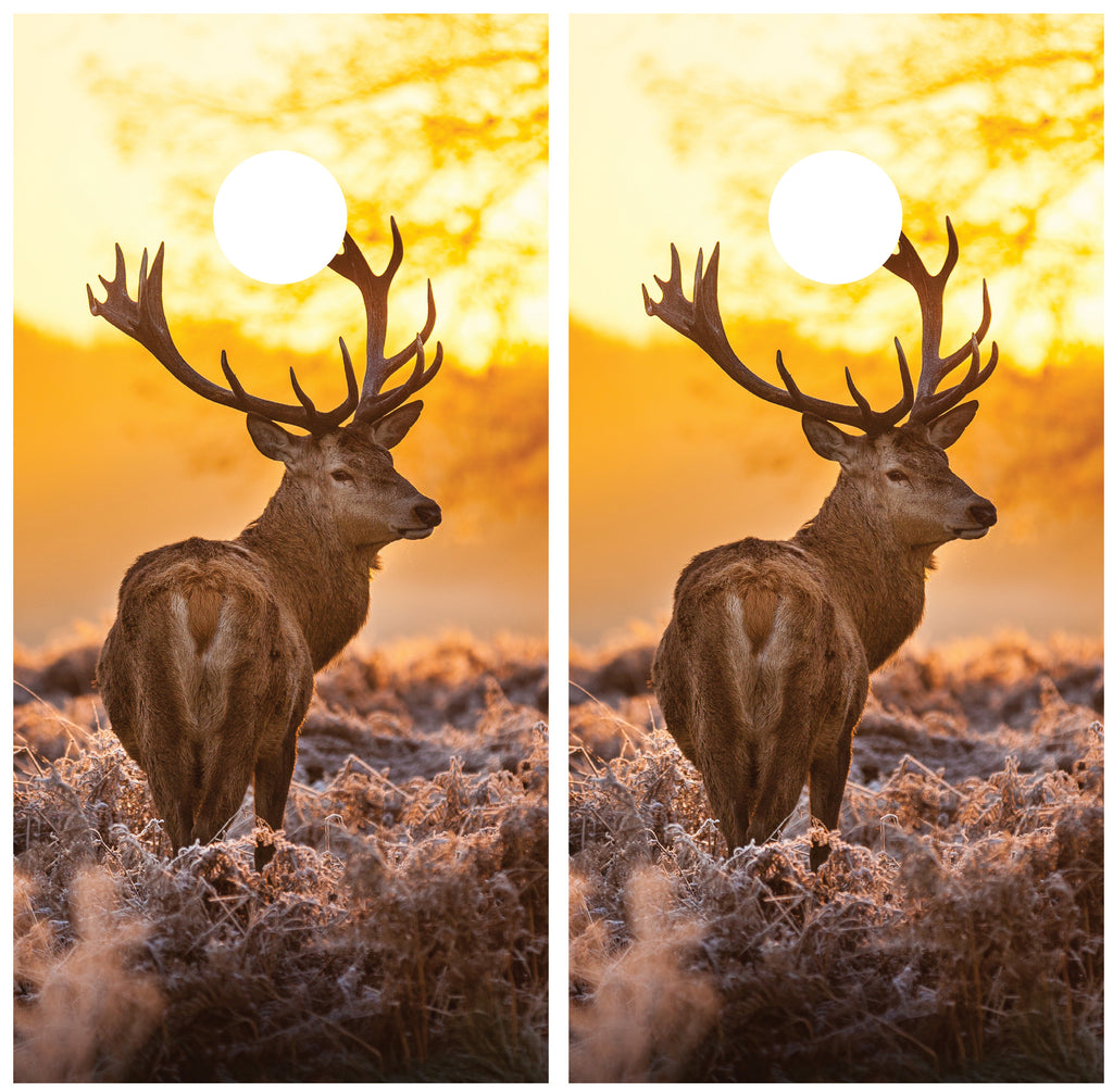 Buck Elk Sunset