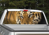 Tiger Eyes Rear Window Decal