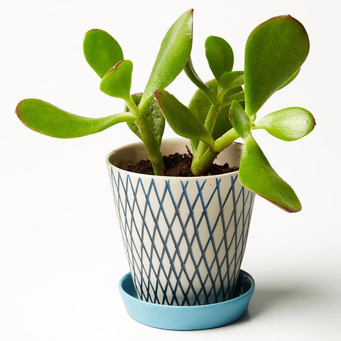 Blue Crisscross Large Pocket Planter