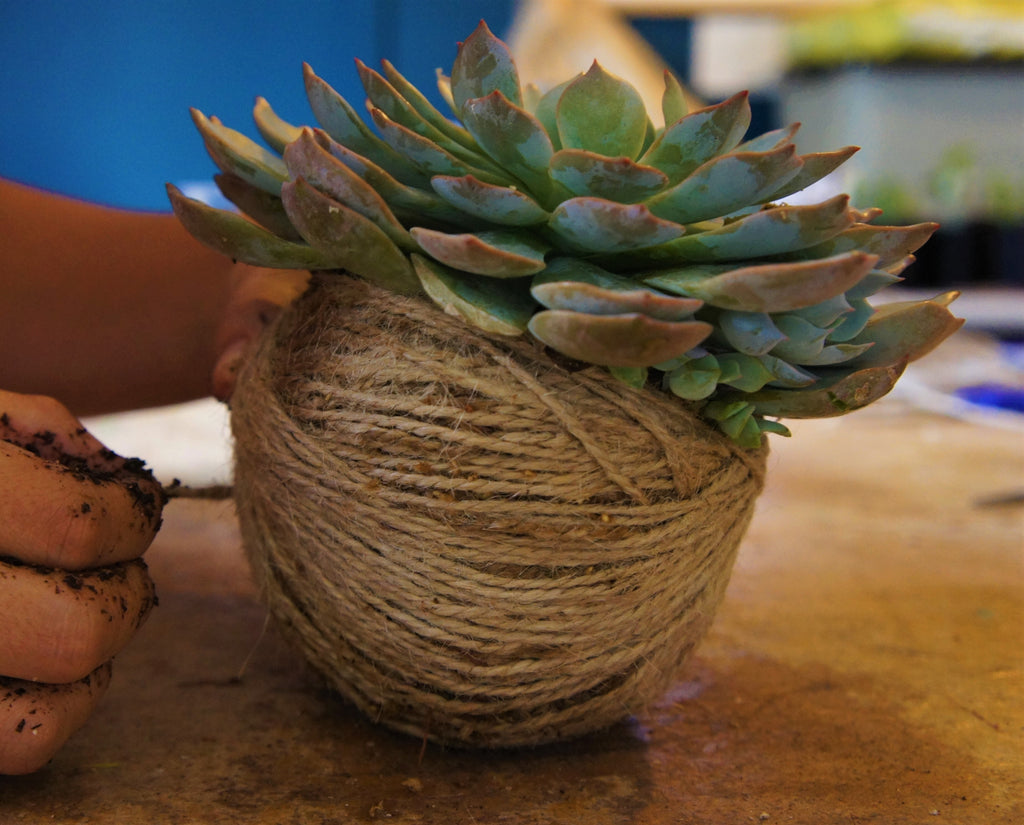 Succulent Kokedama Workshop - 14th of September