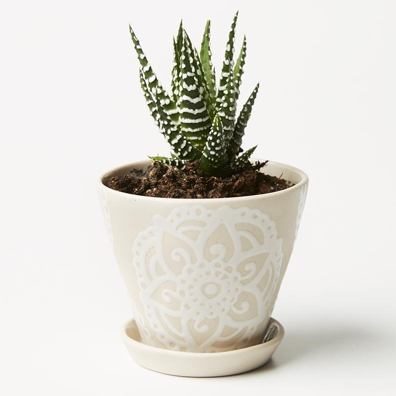 White Mandala Pocket Planter