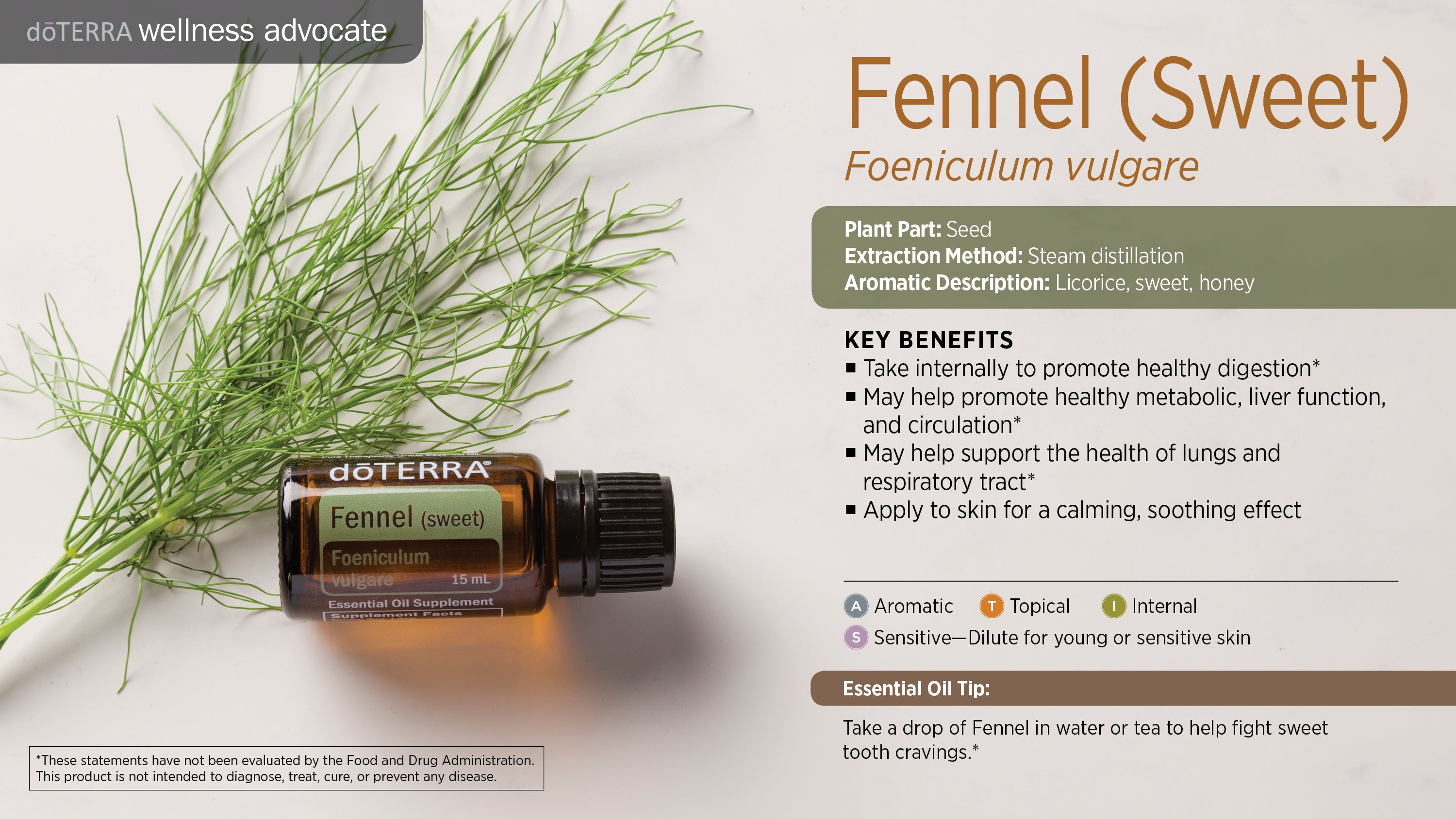 Fennel (Sweet) - Foeniculum Vulgare - Essential Oil