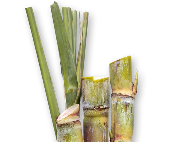 Squalane derived from Sugarcane