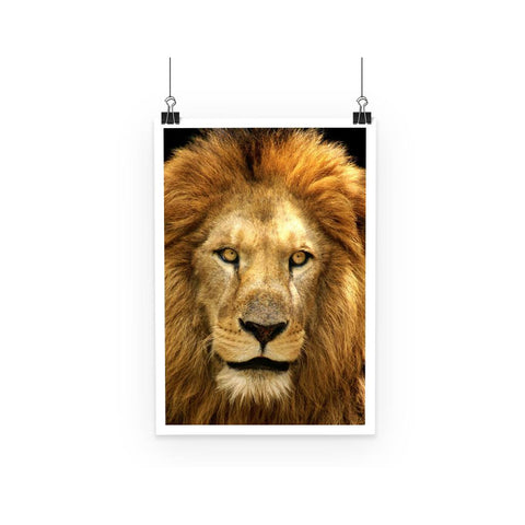 Poster - Lion Face Poster