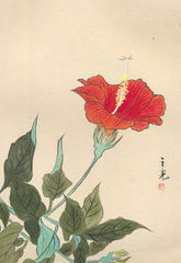 Red Flower - Mid 20th Century Watercolour