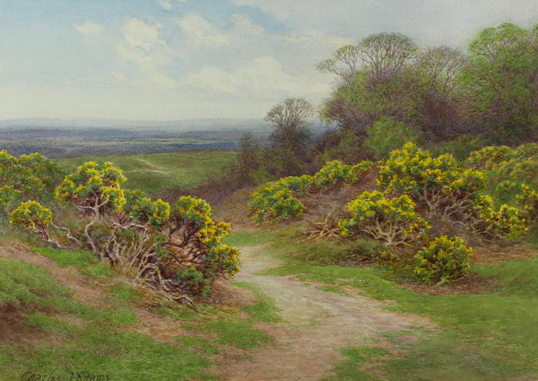 Charles James Adams (1859-1931) - Gorse Bushes, 19th Century Watercolour