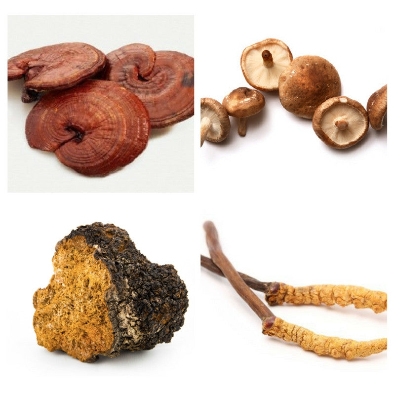 Types of Medicinal Mushrooms and their Health Benefits