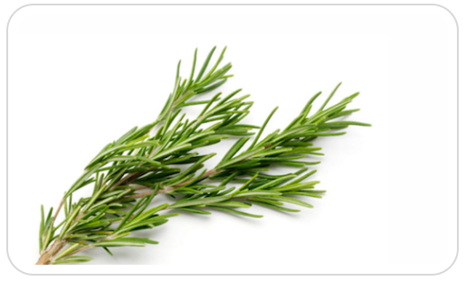 Rosemary inside shampoo for hair growth