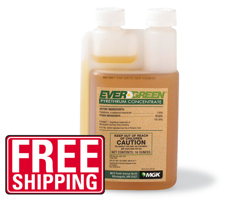 Evergreen Pyrethrum Concentrate (1 Pint) - Bugs Or Us Pest Control Supply