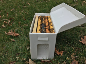 Honey Bee Nuc (Overwintered)