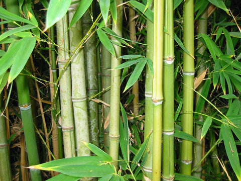 bamboo for eczema