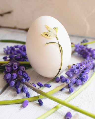 Egg with dried flower by The Lesser Bear