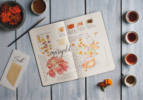Sketchbook Journal of Marigold uses and dyes