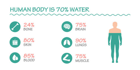 Human Body is Made Up of 70 Percent Water