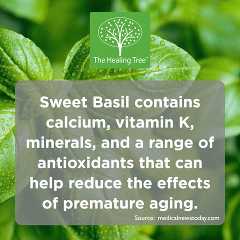 benefits-of-sweet-basil