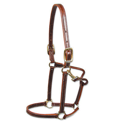 Walsh Showman Leather Halter - North Shore Saddlery