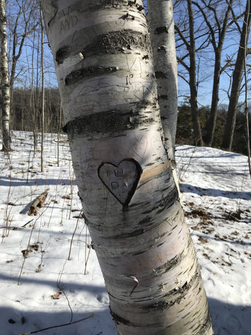 beach tree heart